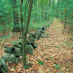 A trail and a stone wall near Meadow Pond on land recently protected by TPL.  Stephenson's Way.  Groveland, MA.