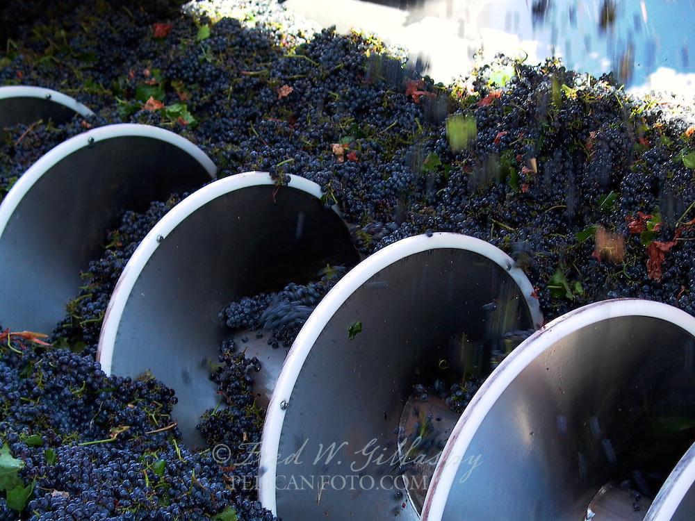 Wine Grape Harvest 0004