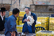slaughtering the chicken. Mea Shearim, Jerusalem, Israel<br /> Kaparot, an aged old Jewish tradition were a chicken is waved over the believer's head, reliving the person from all sins which are passed on to the chicken. The chicken is slaughtered and at times given to charity. Photographed in Mea Sharim, Jerusalem