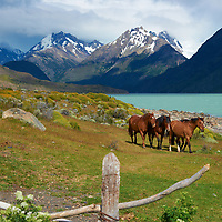 Horses at Estancia Helsingfors in Patagonia. Image taken with a Nikon D3s camera and 24-120 mm f/4  lens (ISO 200, 52 mm, f/5.6, 1/1250 sec)