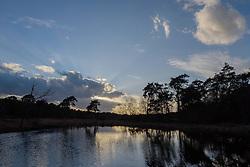 Strijbeekse Heide, Strijbeek, Alphen-Chaam, Noord Brabant, Netherlands