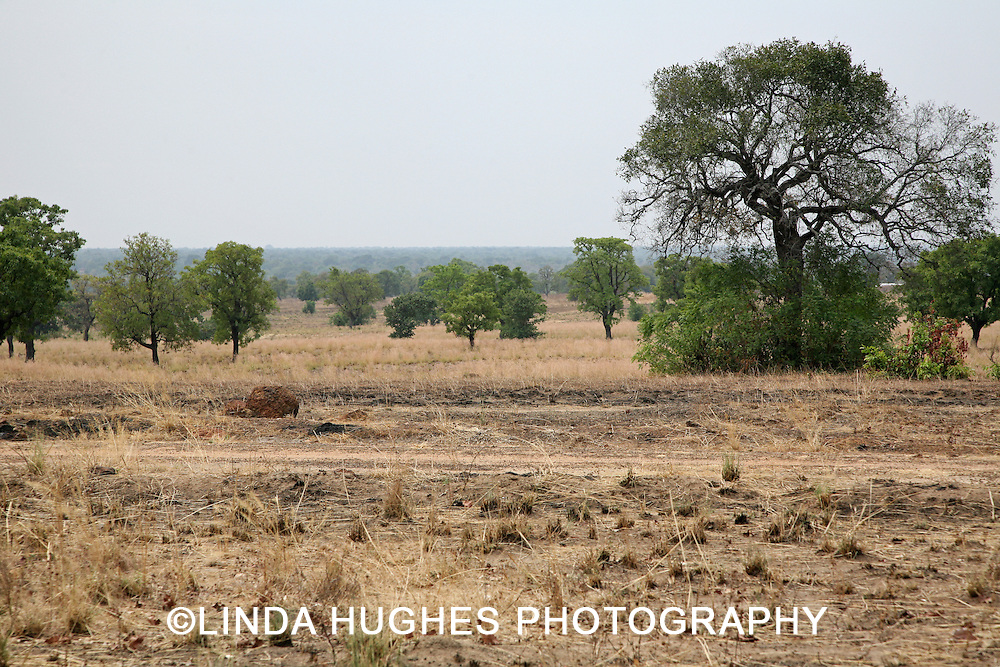 Remote Landscape in the Upper West Region of Ghana West Africa