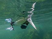 Galapagos Isabela May 2017 Trip