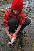 Reindeer slaghtering by the sami group of Saanti Sijte/Essand in the mountains of Mid-Norway. Also the children are helping. Here by washing reindeer tongues in a stream.
