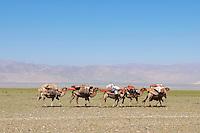 Mongolie. Province de Khovd. Transhumance des nomades à dos de chameaux. // Mongolia. Khovd province. Nomadic transhumance with camels.