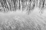 Spring Reflection, Waterton Lakes National Park