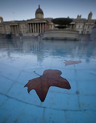 © Licensed to London News Pictures. 25/01/2021. London, UK. Leaves are frozen in ice in the fountains of Trafalgar Square in central London as temperatures remain low. Yesterday saw the first snow of winter in the capital. Photo credit: Peter Macdiarmid/LNP