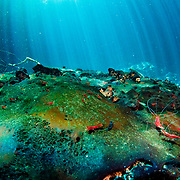 The floor of a blue hole in The Bahamas is covered in decaying matter, food for the Cuban red cave shrimp.