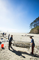 Group of people (organized by Mark Ward of Sea Turtles Forever) sifting sand to remove micro plastic from beach. Cannon Beach, OR.