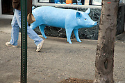 blue pig standing in the street