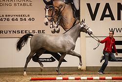 076, Special Touch van het Vlierhof<br /> BWP Hengstenkeuring 2021<br /> © Hippo Foto - Dirk Caremans<br />  11/01/2021