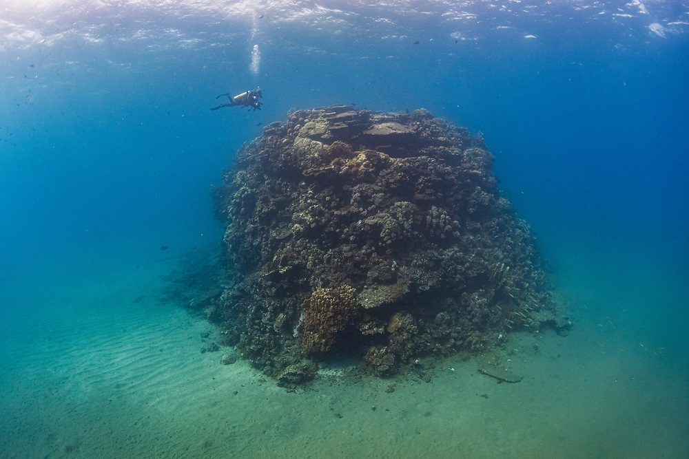A scuba diver approaches a coral reef in the Red Sea off Marsa Alam, Egypt.