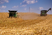 30 SEPTEMBER 2020 - WOODWARD, IOWA: KEVIN LAMBERT, left, operates his combine in a cornfield on Lambert family land in Woodward. Lambert said it would take nearly twice as long to combine this year's corn compared to last year's because of damage to fields caused by the derecho wind storm that roared through central Iowa in August. The derecho wind storm damaged more than 550,000 acres of Iowa cornfields. In addition to derecho damage, Iowa farmers are wrestling with drought related damage. A persistent drought in central Iowa has stunted corn plants and reduced yields. Because of the unusually dry weather, this year's harvest is three weeks ahead of last year's and nine days ahead of average.       PHOTO BY JACK KURTZ