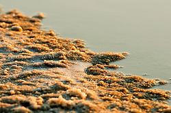 Il complesso produttivo delle saline è situato nel comune italiano di Margherita di Savoia (nome dato dagli abitanti in onore alla regina d'Italia che molto si adoperò nei confronti dei salinieri) nella provincia di Barletta-Andria-Trani in Puglia. Sono le più grandi d'Europa e le seconde nel mondo, in grado di produrre circa la metà del sale marino nazionale (500.000 di tonnellate annue).All'interno dei suoi bacini si sono insediate popolazioni di uccelli migratori e non, divenuti stanziali quali il fenicottero rosa, airone cenerino, garzetta, avocetta, cavaliere d'Italia, chiurlo, chiurlotello, fischione, volpoca..Formazione di sale nei pressi della sponda