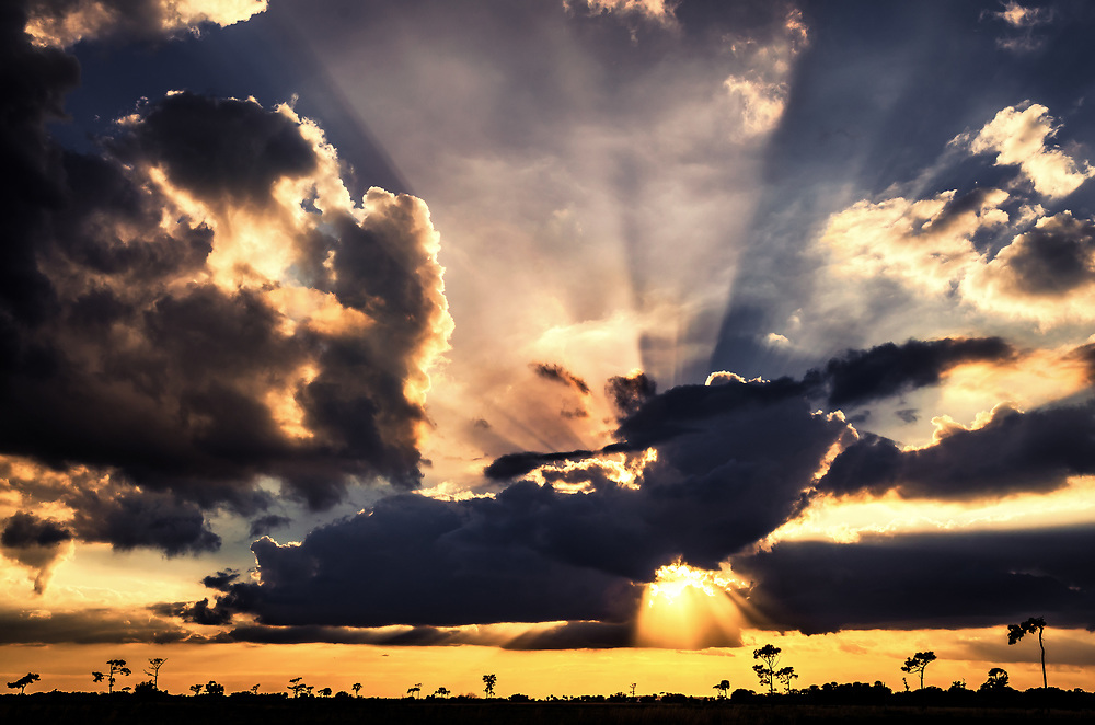 Florida prairie silhouetted against a heavenly sunset.