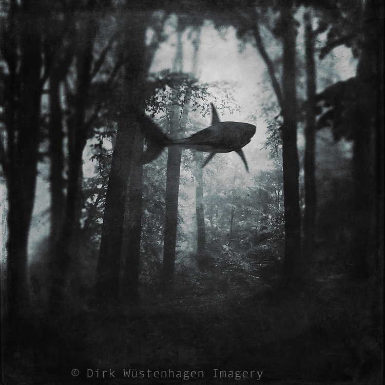 Dark forest scenery with a shark swimming through the trees - manipulated surreal photomanipulation