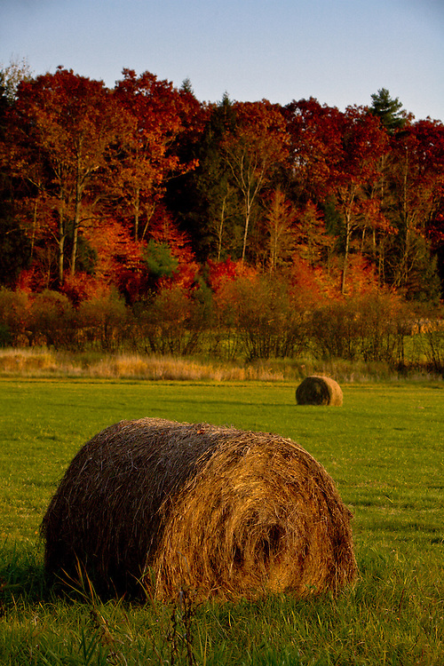 Dusk paints bales of hay in a field in Springfield, Vermont