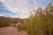 Ein Saharonim Desert Oasis in the Negev Desert, Israel