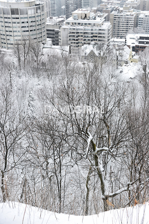 View of Downtown Montreal and Snow covered Mont Royal Park in Winter, Parc du Mont Royal, Montreal, Quebec, Canada