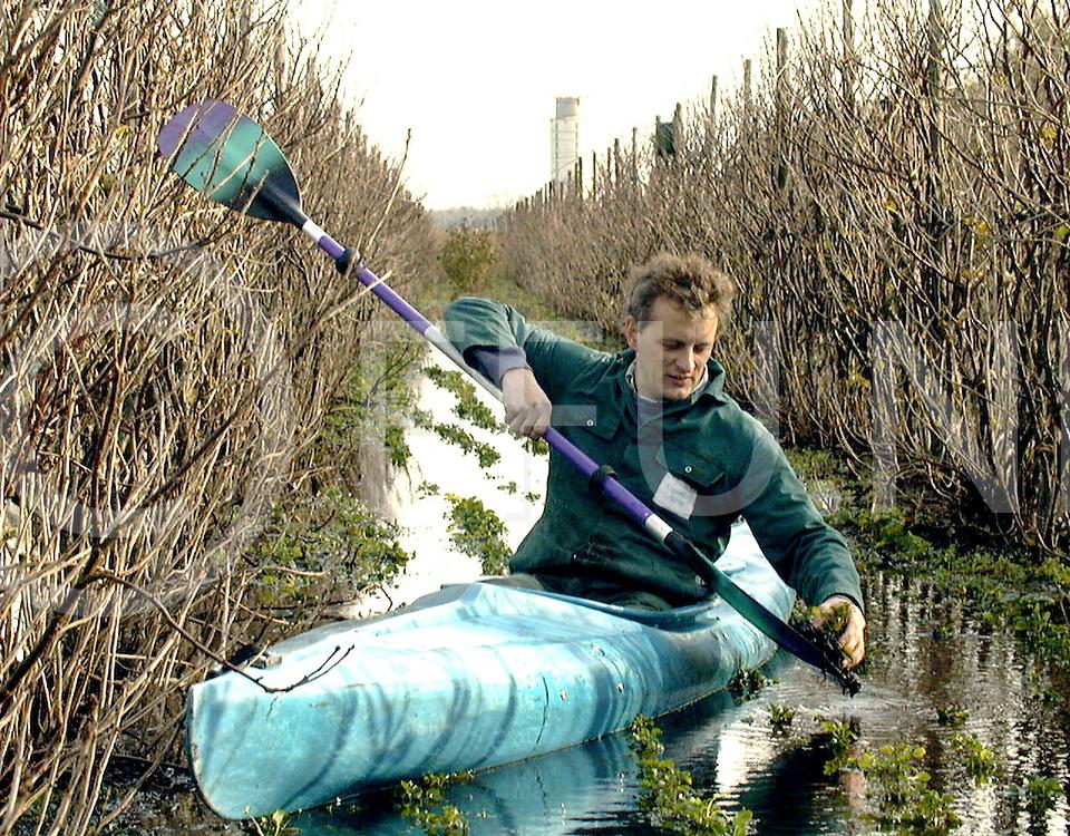 Fotografie Uijlenbroek©1998/Paul Bos.981105 nieuwleusen.ondergelopen kwekerij van joop bekendam..op foto vaart joop met zijn kano over de viooltjes en bekijkt er een mbv zijn peddel