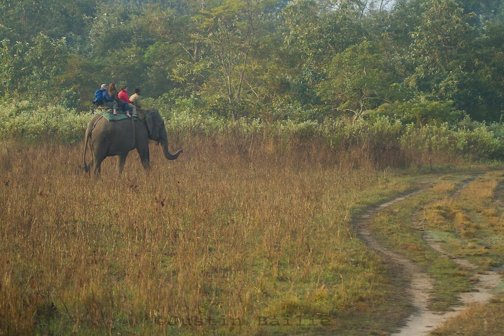 Elephants in Manas National Park, India