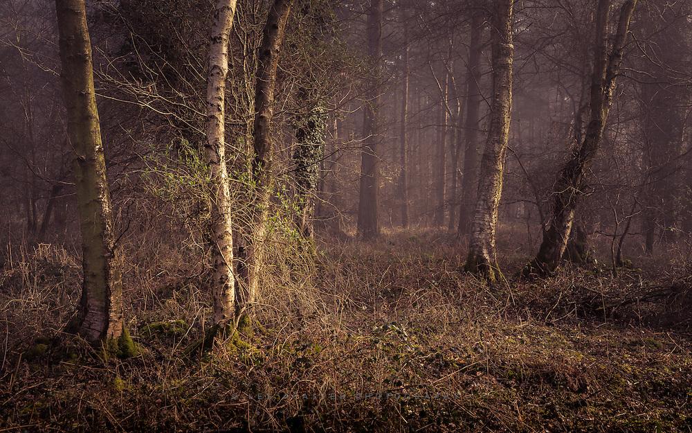 Scrubby undergrowth from Knettishall Heath