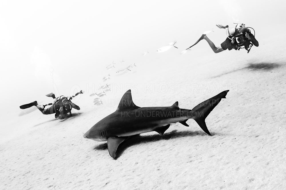 Nick and Chris of Pro Photo Baja sharing this moment with a beautiful male bull shark.