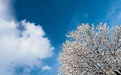 19.04.2017, Kaprun, AUT, Wintereinbruch in Salzburg, im Bild eingeschneiter Baum mit Wolken am blauen Himmel // snow covered tree with clouds in the blue sky, Kaprun, Austria on 2017/04/19. EXPA Pictures © 2017, PhotoCredit: EXPA/ JFK