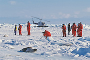 Eco-tourists viewing harp seals in the Gulf of St. Lawrence