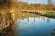Winter afternoon sun on the River Thames near the source, Ewen, Gloucestershire, Uk