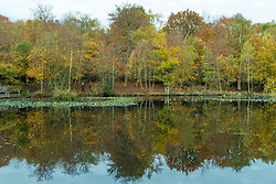© Licensed to London News Pictures. 06/11/2019. BURNHAM, UK.  Autumnal trees reflected in one of the ponds in Burnham Beeches in Buckinghamshire.  The 220 hectare historic woodland is a National Nature Reserve and European Special Are of Conservation, famous for its ancient pollards, many of which are several hundred years old.  Now owned by the City of London, it has been preserved as a public open space popular with nature lovers and dog-walkers alike.  Photo credit: Stephen Chung/LNP