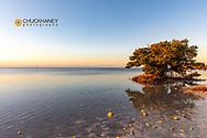 Mangrove in first light at Anne's Beach in Islamorada, Florida, USA