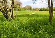 Mown grass path through wildflower meadow large private garden, Wiltshire, England, UK