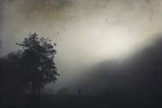 Morgenstimmung bei Nebel im Brückenpark Müngsten