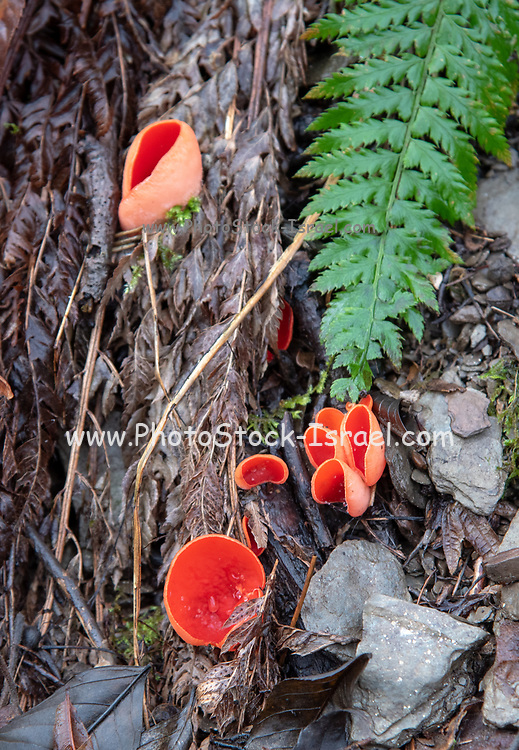 Winter forest floor. toadstools and fungi closeup. Photographed in Germany in January