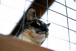 Zelda the cat surveys the back yard of her Oakland, Calif. home, Sunday, Nov. 1, 2020. (Photo by D. Ross Cameron)