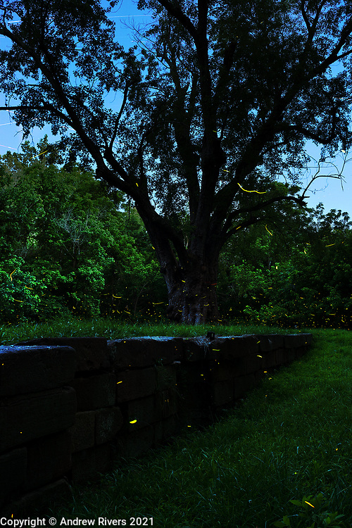 Fireflies have returned for the summer.
