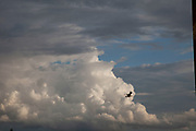 Seagull passes a dramatic evening sky.
