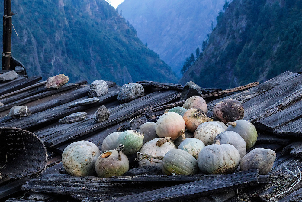 Squash curing on the roof of a house in the Manaslu region of Nepal.