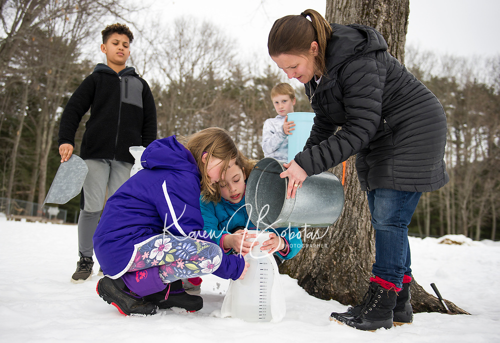 Kaitlin Herbert, Maria Pena, Mrs. Bolduc Lucas Diaz and Tucker Crawford collect sap from Ms. Nash-Boucher / Haddock tree for their new sap house at Gilford Elementary School.  (Karen Bobotas/for the Laconia Daily Sun)