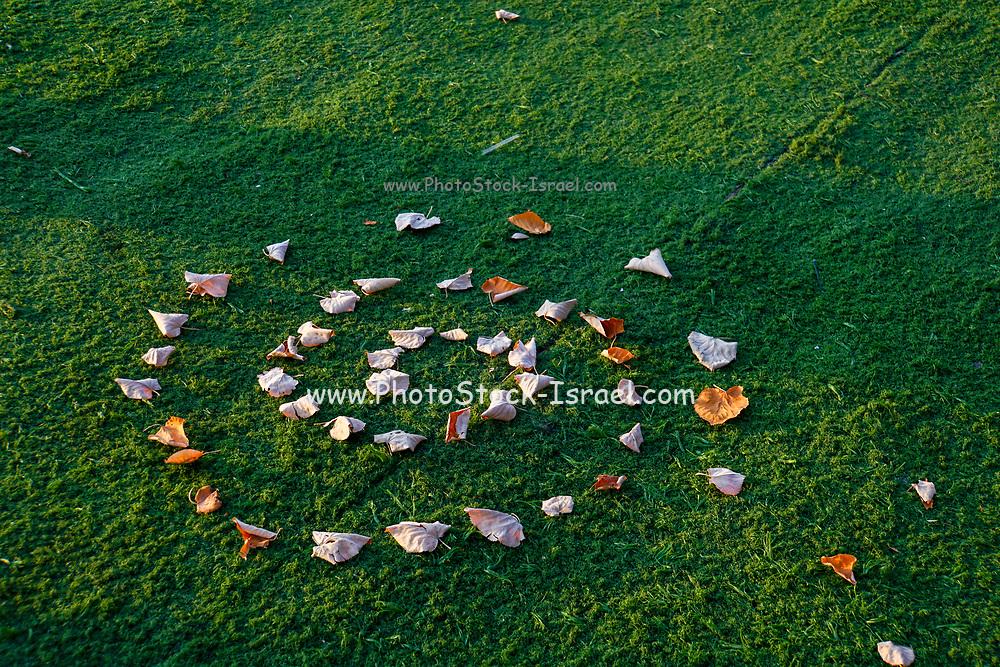 leafs in a spiral design on green grass