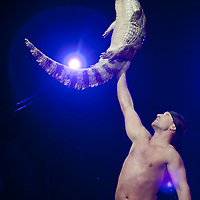 Artist performs with an crocodile during a dress rehearsal of the Miracle and Mirage show of the Russian Water Circus led by Yana Shevchenko in Budapest, Hungary on March 31, 2011. ATTILA VOLGYI