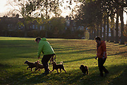 Dog owners exercise their pets during a cold autumn afternoon in south Londons Ruskin Park 17th November 2016, in London, England.