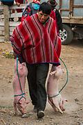 Indian & pigs<br /> Calpi animal market<br /> Parish of Riobamba, Chimborazo Province<br /> Andes<br /> ECUADOR, South America