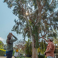 Biologists Courtney McAmmon & Dan Cooper check on a red-tailed hawk nest in a residential neighborhood in Los Angeles, California.