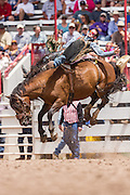 Bareback rider Caleb Bennett hangs on to his bronco during the Bareback Championships at the Cheyenne Frontier Days rodeo in Frontier Park Arena July 26, 2015 in Cheyenne, Wyoming. Frontier Days celebrates the cowboy traditions of the west with a rodeo, parade and fair.