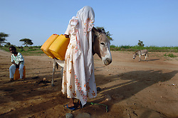 Kadija collects water with a donkey August 25, 2006 in Barentu, Eritrea. Some of the most difficult and labor intensive work is gathering wood and water and it is traditionally carried out by women only. (Ami Vitale)