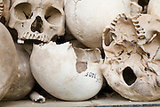 14 MARCH 2006 - PHNOM PENH, CAMBODIA: Human skulls on display at the Choeung Ek - Killing Fields near Phnom Penh, Cambodia. The area is now a memorial to the victims of the Cambodian genocide. In the three years, eight months and 20 days that the KR controlled Cambodia, they massacred more than 2 million people in a bloodletting that did not stop until the Vietnamese invaded Cambodia and ousted the KR regime. The KR started by murdering anyone who had an education, like teachers, technocrats the intelligentsia, and monks and eventually started killing members of their own movement they suspected had deviated from the movement's path.  Photo by Jack Kurtz / ZUMA Press