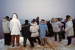 Cutting Off Tail Of Bowhead Whale