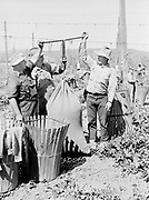 5598Weighing hops brought in by pickers—John Mayerhofer, Bert Mosier, check boss, and George Brackenburg, at the E. Clemens Horst hop ranch near Independence, Oregon. September 1, 1942.